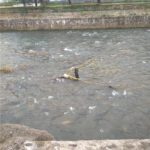 albia râului săsar