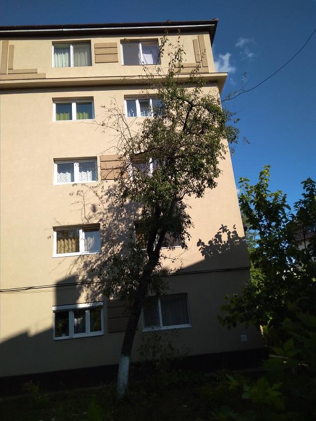copaci înclinați